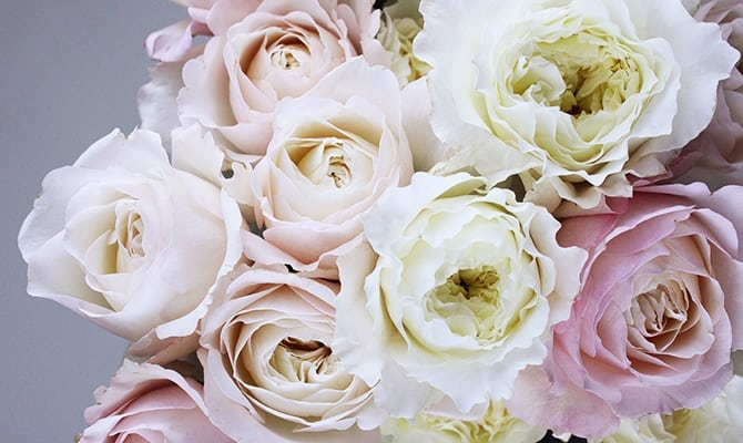 How to choose wedding flowers floral themes arrangements rose love joy and beauty dating back to the ancient greeks and romans the rose also represents sympathy and sorrow as well as the keeping of secrets mightylinksfo