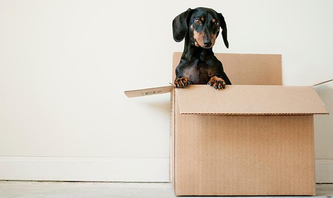 Puppy sitting in box