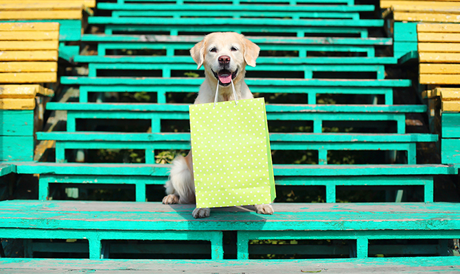 Golden Retriever dog holding a shopping bag
