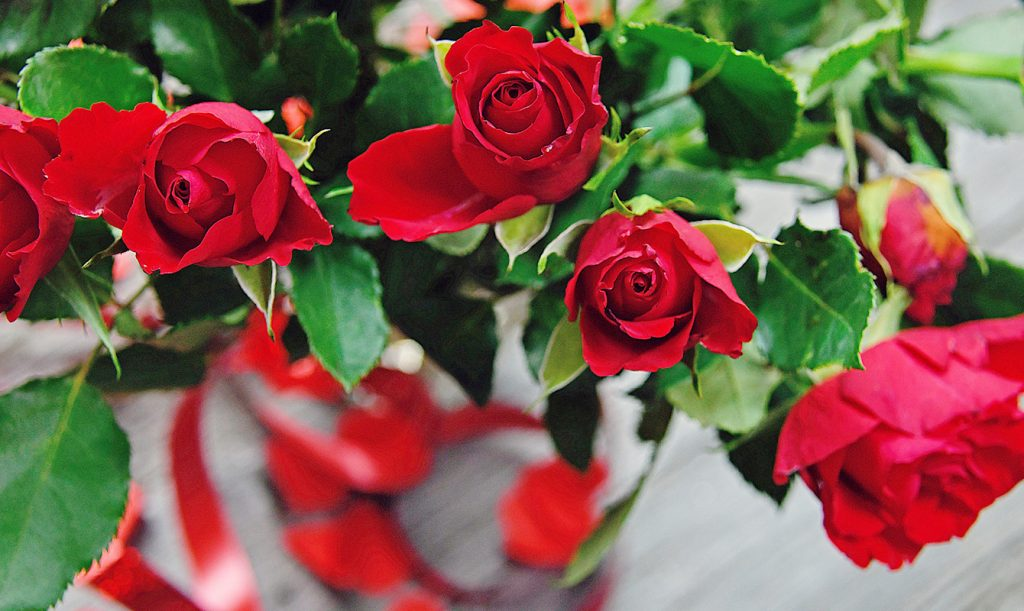 red roses for valentines day sales