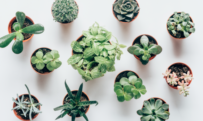 There are plenty of water-storing succulents that make the ultimate easy-care floral gift.